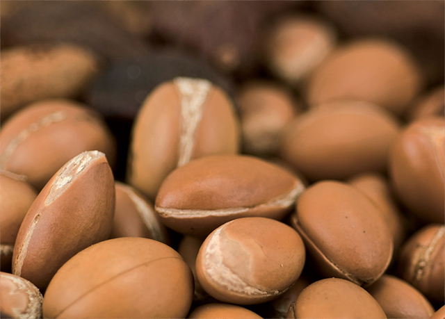 product-shea-nuts